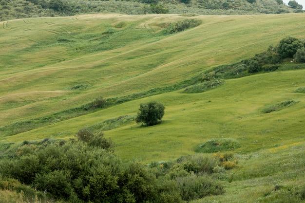 Bardzo długie ujęcie spokojnego krajobrazu z drzewami