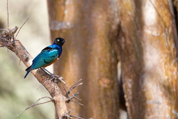 Bardzo kolorowe rodzime ptaki siedzą na zebraniach drzew