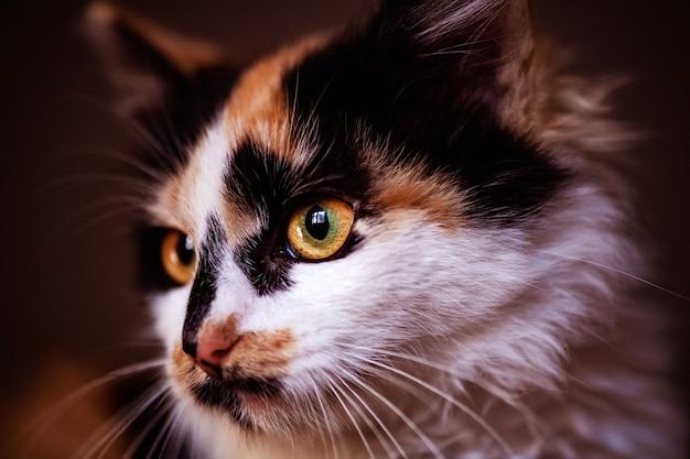 Bardzo miła i delikatna koteczka. czerwony kot. świat zwierząt.