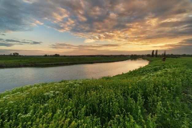 Bardzo piękny zachód słońca, wschód słońca na brzegu rzeki ze zgiętą, wysoką, młodą, zieloną trawą na pierwszym planie