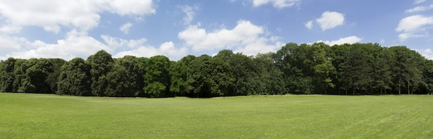 Bardzo wysokiej rozdzielczości treeline z kolorowym niebieskim niebem