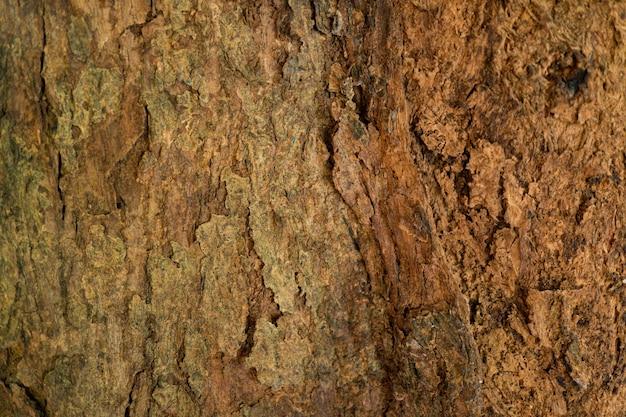 Bark drewna tekstury tła