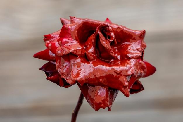 Barwione czerwone róże farbą