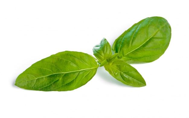 Basilów liście odizolowywający na bielu