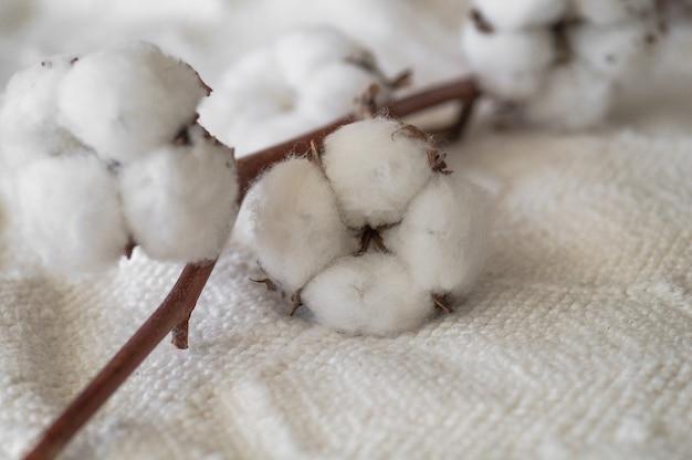 Bawełna z ciepłym swetrem. delikatne białe bawełniane kwiaty na drewnianej desce.