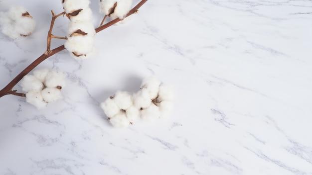 Bawełniana gałązka kwiatowa na białym marmurowym tle widok z góry minimalny układ wysoki kąt ujęcia w studio