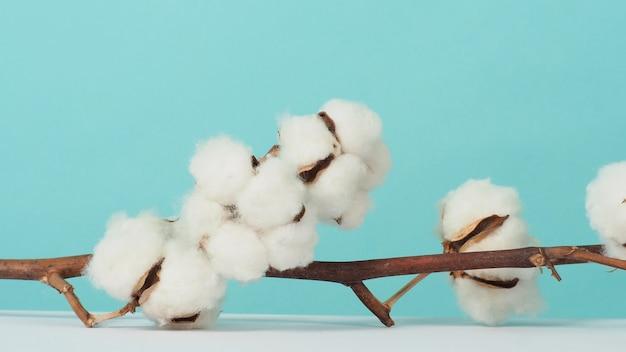 Bawełniana gałązka prawdziwie delikatna miękka i delikatna naturalna biała bawełna gałązki kwiatowe gałązki na światło