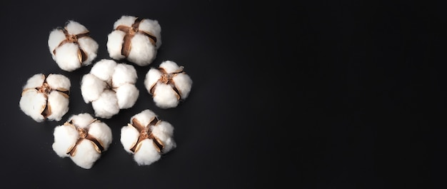 Bawełniane kwiaty na białym tle na czarnym tle strzał studio płasko leżał kąt widzenia z góry biały bawełniany flowe