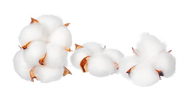 Bawełniane kwiaty na białym tle