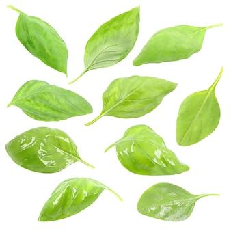 Bazylia, zielone liście, zestaw, izolowana na białym tle, zbliżenie makro