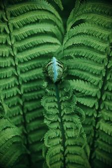 Beautyful paproci liście. zielone tło naturalne kwiatowy paproci