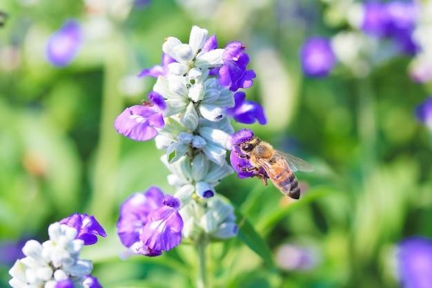 Bee zapylających kwiaty