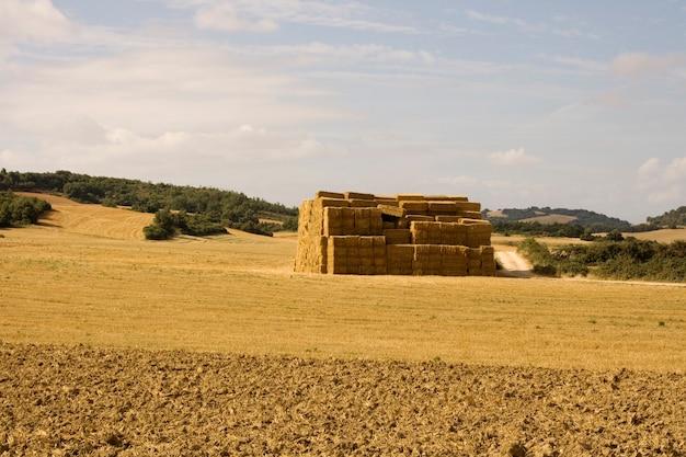 Bele siana na hiszpańskiej wsi latem