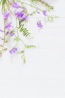 Bellflower na białym drewnianym tle