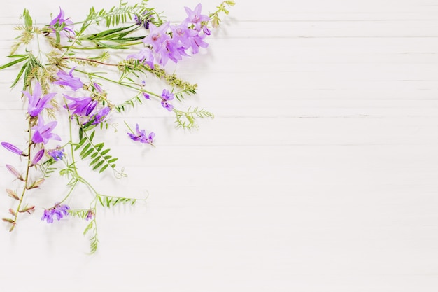 Bellflower na białym drewnianym