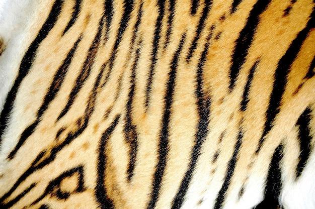 Bengalski tygrys futro