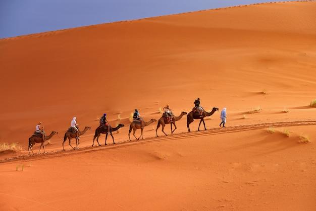 Berber człowiek wiodący karawanę wielbłądów
