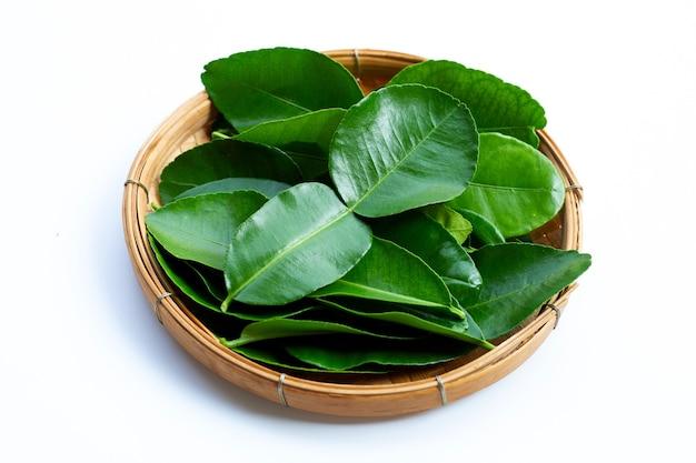 Bergamotka kaffir lime pozostawia zioła świeży składnik na białym tle.