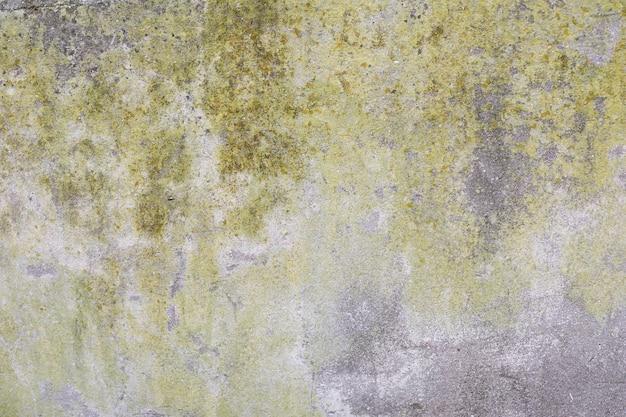 Betonowa ściana z mchem i brudem