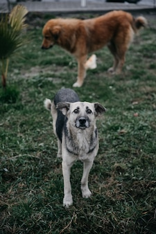 Bezdomne psy spacerujące po parku