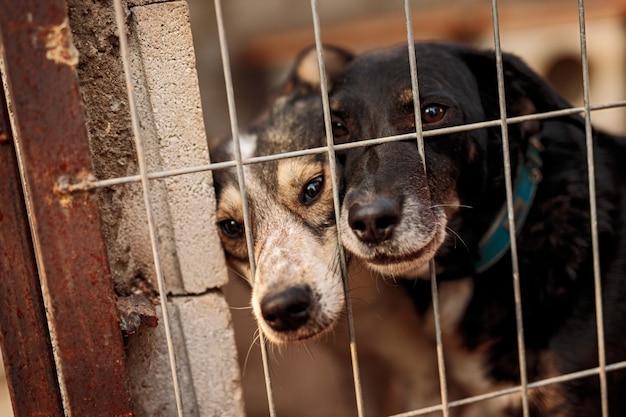 Bezdomne psy za kratami klatki