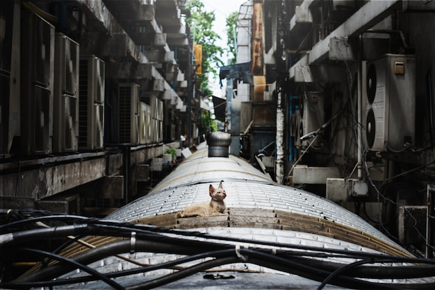 Bezdomny baby cat city lonely concept