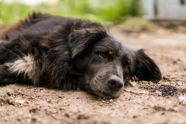 Bezdomny czarny pies leży na zielonej trawie i patrzy w kamerę.