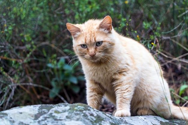 Bezdomny czerwony kot siedzi na dużej skale w lesie.