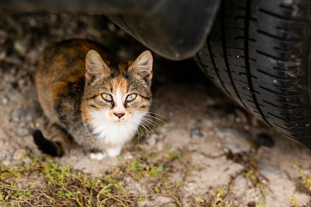 Bezdomny kot bez rasy w schronisku na spacer po ulicy