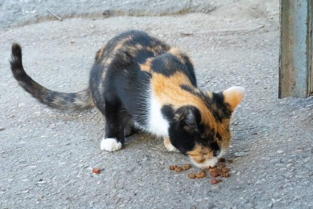 Bezdomny kot jedzący jedzenie na ulicy