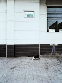 Bezdomny kot spaceru miasto koncepcja