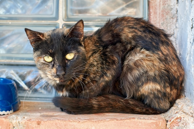 Bezdomny kot szylkretowy przy oknie wygląda smutno