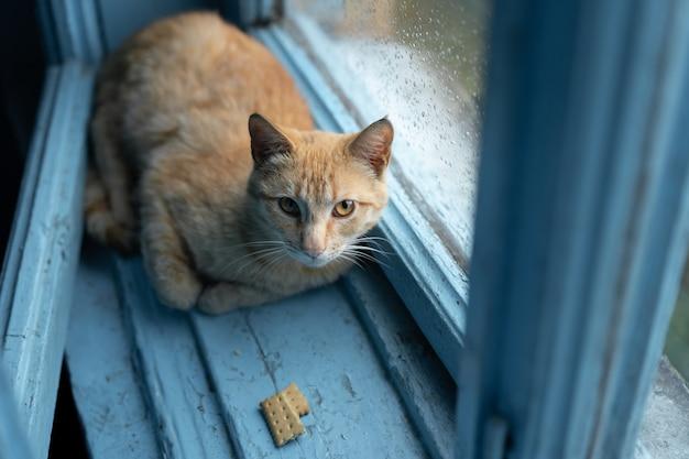 Bezdomny kot ukrywa się przed deszczem
