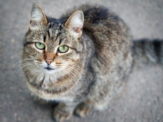 Bezdomny kot ulicy z bliska. koncepcja ochrony bezpańskich zwierząt. opuszczone tło miejskie.