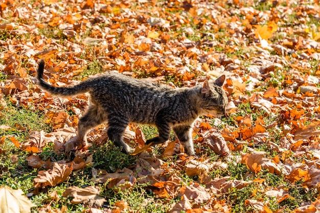 Bezdomny kot w parku miejskim jesienią