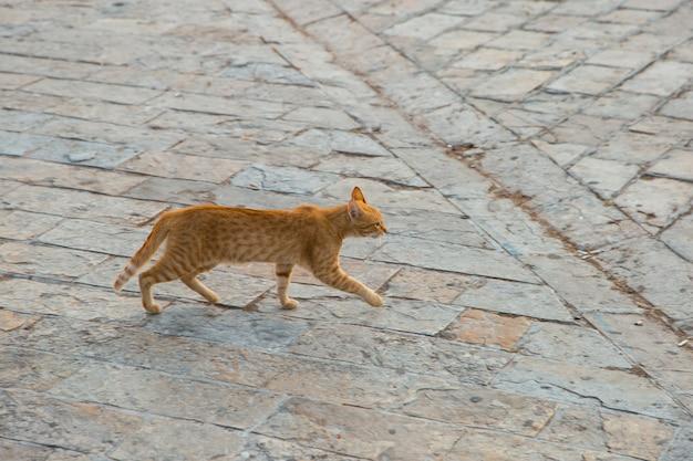 Bezdomny kot zajmuje się swoimi sprawami na ulicy.