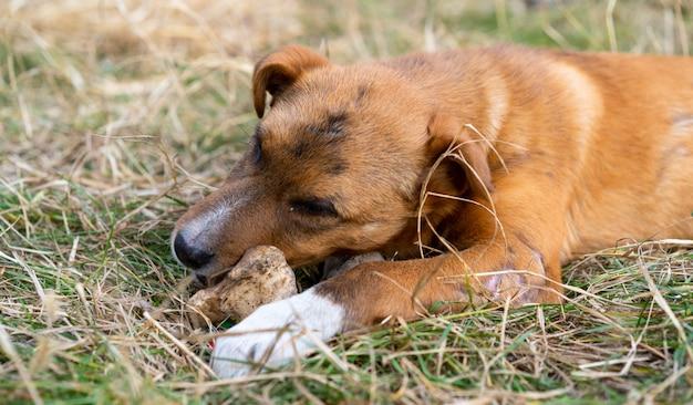 Bezdomny pies je kość na ulicy