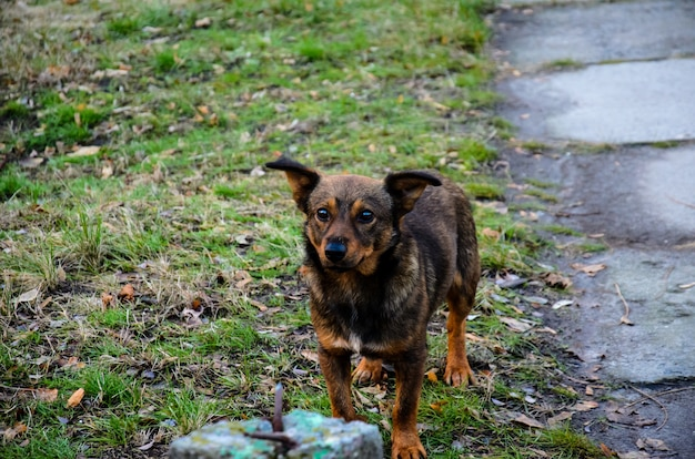 Bezdomny pies kundel w parku miejskim