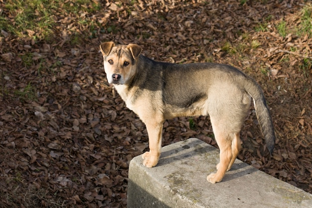Bezdomny pies na mrozie
