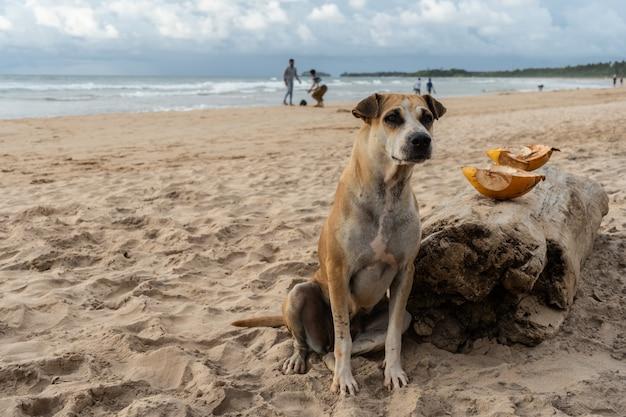 Bezdomny pies siedzi na piasku w pobliżu oceanu.