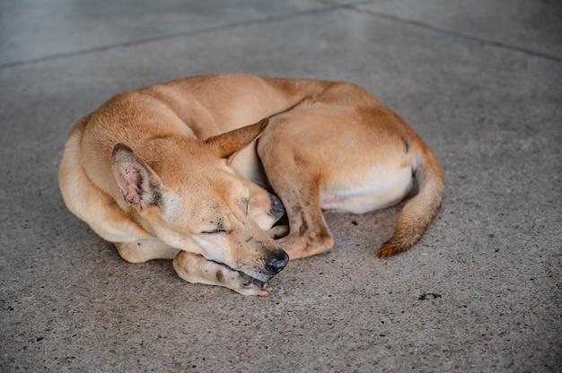 Bezdomny pies śpiący na podłodze