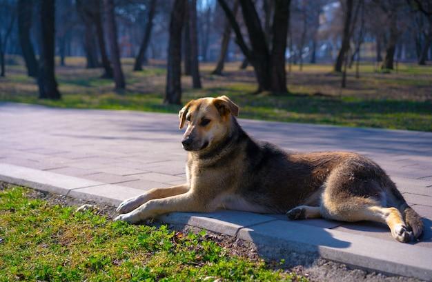Bezdomny pies wygrzewa się w słońcu