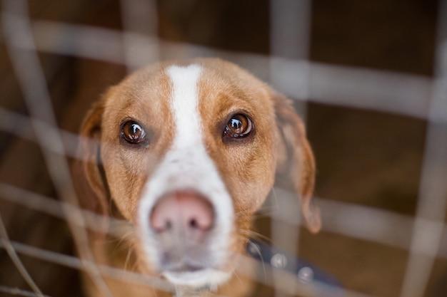 Bezdomny pies za kratkami wygląda z ogromnymi smutnymi oczami