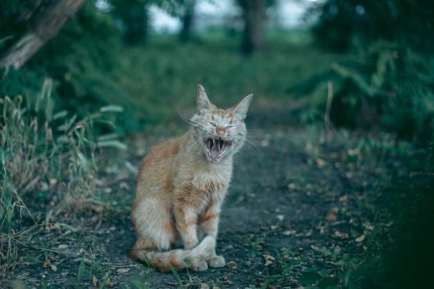 Bezdomny, porzucony, głodny i zadbany kot