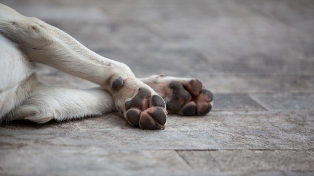 Bezdomny zmęczony pies śpi na podłodze na świeżym powietrzu