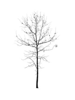 Bezlistne drzewa ciemność pozostawiając niesamowitą scenę; sylwetka przerażającego drzewa halloween z tyłu.