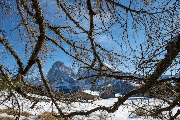 Bezlistne drzewa w śnieżnym krajobrazie otoczonym wieloma klifami w dolomitach