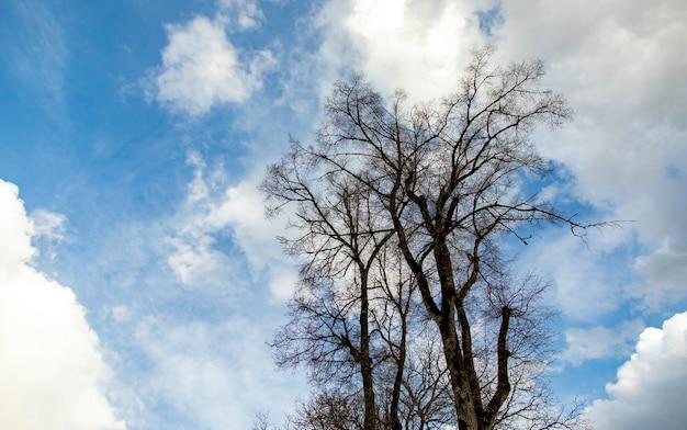 Bezlistne drzewo pod abstrakcyjnym niebem