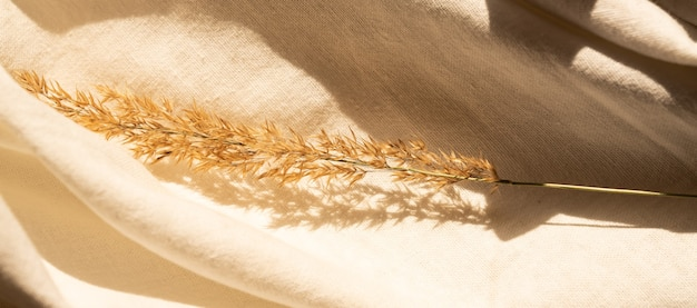 Beżowa tkanina w neutralnym kolorze, lniana tkanina z dekorem sucha trawa pampasowa. transparent.