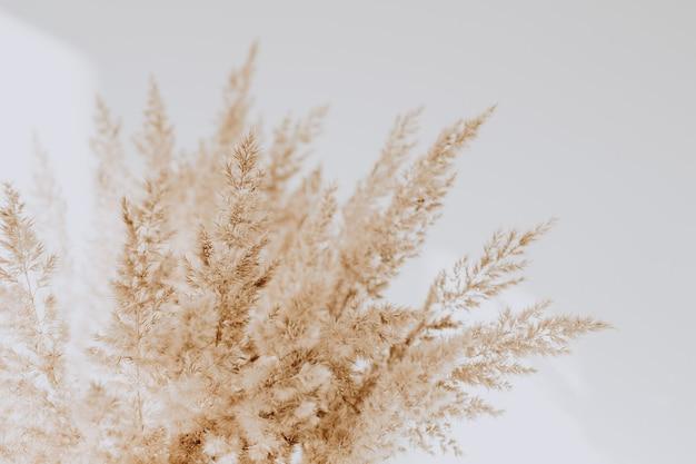 Beżowe trzciny na białej ścianie. piękne w neutralnych kolorach